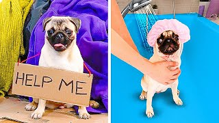 KINDNESS IS SO SIMPLE! 32 sweet ideas for pets, dog's and cat's gadgets    Homeless dog story