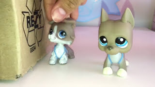 LPS: The New boy Haves a Crush.