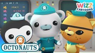 Octonauts | Creature Reports With Octonauts | Compilation | Wizz Cartoons