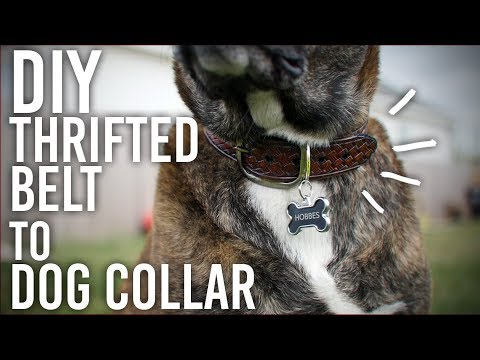 How to Make a Dog Collar from a Thrifted Belt - DIY