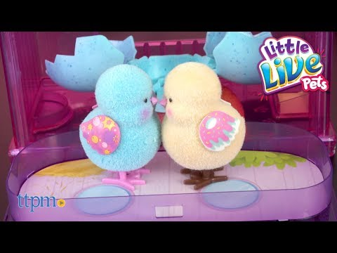 Little Live Pets Surprise Chick House and Surprise Chick from Moose Toys