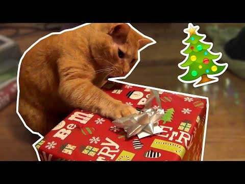 Christmas When You Have Cats! 😻