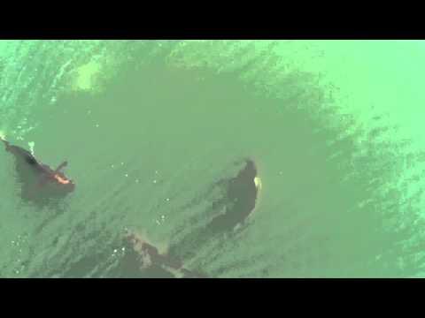 Shark Attack in Myrtle Beach 2012