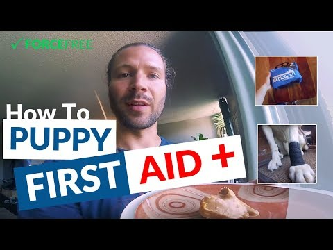 How To: Bandage a Dog's Injured Paw Pad + Keeping Them Calm