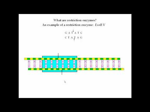Restriction Enzymes Pt 1
