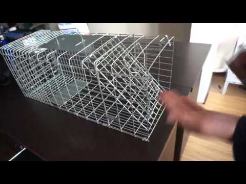 How To Assemble A Live Animal Trap