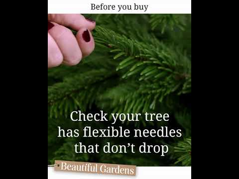 Checking your Christmas trees needles
