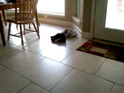 Dog chasing a fly