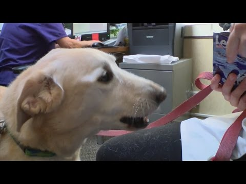 New FDA approved prescription veterinary medicine can ease dog anxiety due to loud noises
