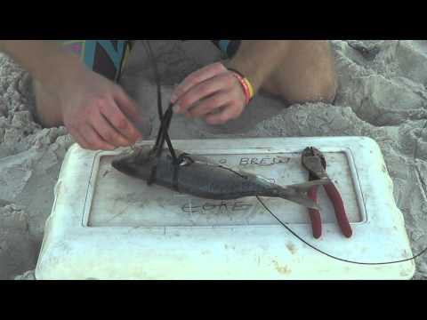 How To Rig a Shark Bait