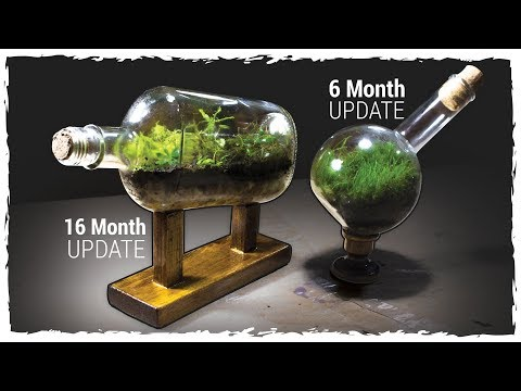 Mossarium 6 Mo Update + Ship-in-a-Bottle Terrarium 16 Mo Update