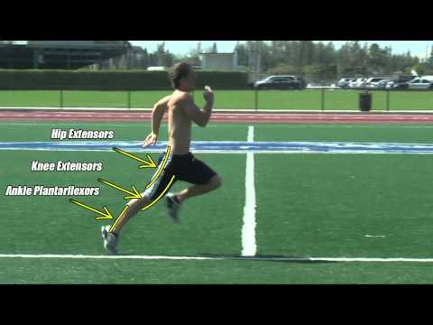 Drive Phase of Sprinting: aka Power or Push phase. Muscles & Motion.