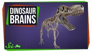 Where Are All the Dinosaur Brains?