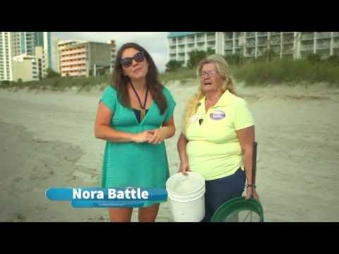 Shell Collecting in Myrtle Beach, South Carolina