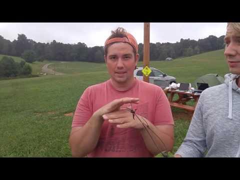 German Scientist find unique plants at Chantilly Campground