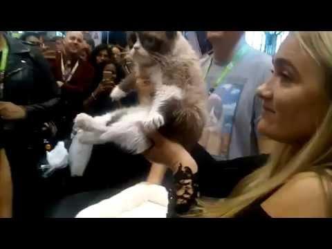When Grumpy Cat Saw New York Comic Con 2015
