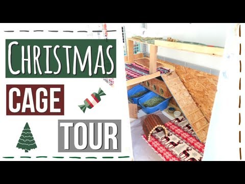 Christmas Rabbit Cage Tour 2017