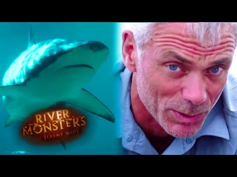 Catching A Baby Bull Shark - River Monsters