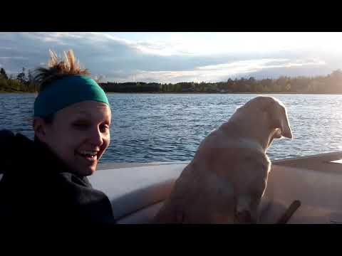 Labrador Dog Whimpering Because Girl is in the Lake on Kneeboard