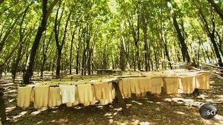 Natural Rubber | How It's Made
