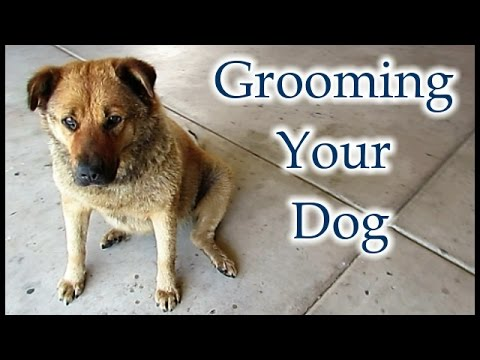 How To Give Your Dog A Haircut - Grooming Your Best Friend At Home