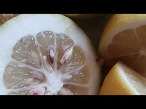 How to Grow  Lemon Tree from Seed in europe