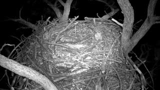 Big Bear Bald Eagle Nest