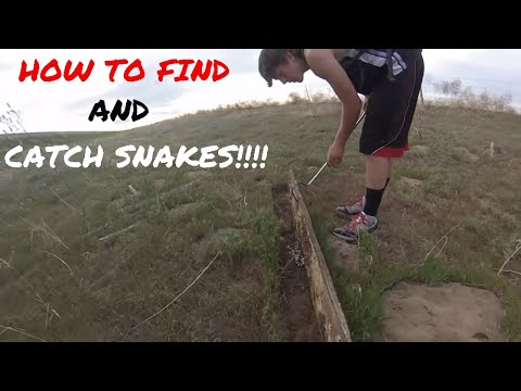 How to find and catch snakes