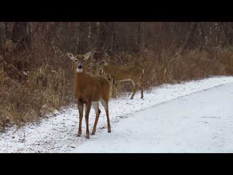 Enjoy the Last Snow of March and many Deer in Humber