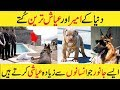 Download  Richest Pets In The World    The Richest Dog in the World Urdu/Hindi MP3,3GP,MP4
