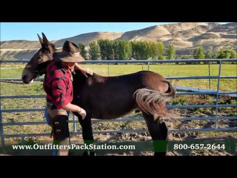 Fitting a Pack Saddle Part 1