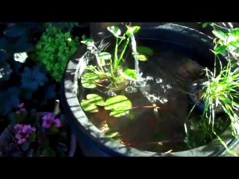Whiskey Barrel Water Garden