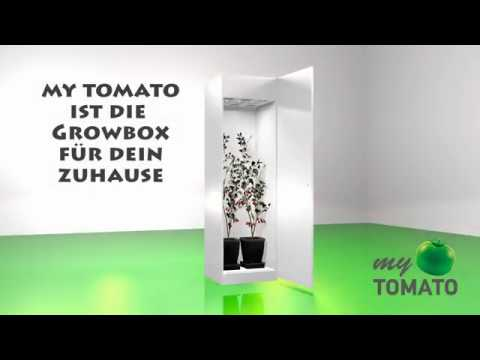 my TOMATO - GROWBOX - homegrowing for everyone - Deutsch