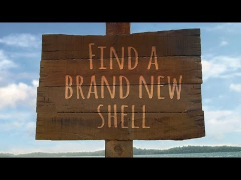 The Perfect Shell-ter (Find a brand new shell)