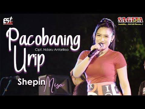 Download Lagu Shepin Misa Pacobaning Urip Mp3