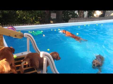 Dogs swimming in intex pool!