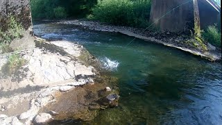 Fly fishing for another big brown trout|Fly fishing Croatia|Kupa river