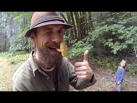 Chanterelle - The Golden Mushroom Treasure Hunt With Yarrow Willard