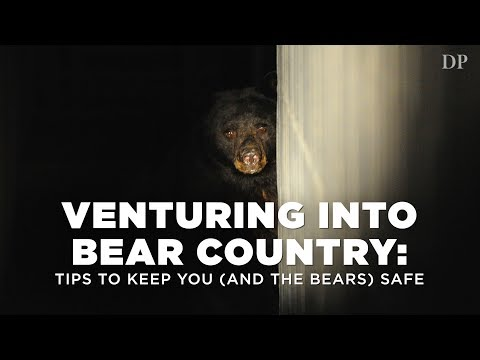 Venturing into Bear Country:  Tips to keep you (and the bears) safe