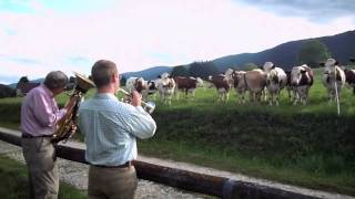 Jazz for Cows