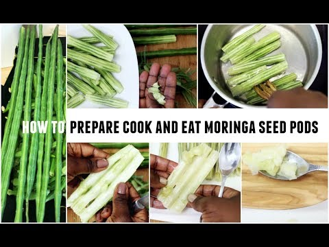 Moringa Oleifera Seed Pods Drumstick Tree Pods How To Prepare Cook And Eat Superfood