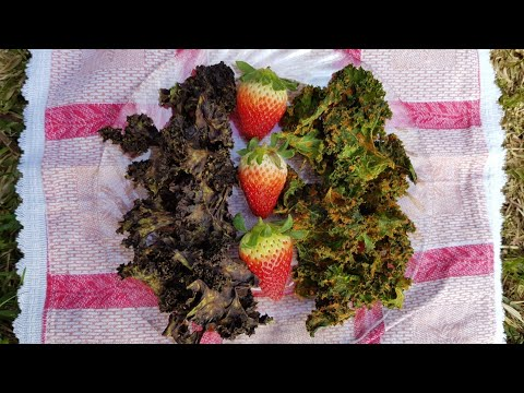 2 RAW Kale Chips Recipes - CHOCOLATE and Savory With Spices 🍫♥️