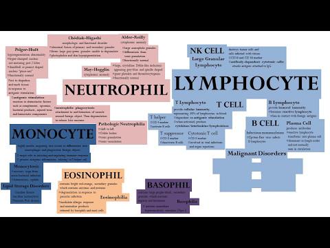 WBCs Leukocytes - Amega Method