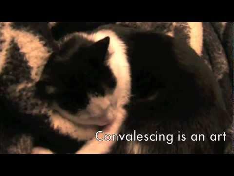 Kitten after her sterilization