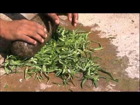 Treatment for tick infestation in cattle Kannada BAIF Karnataka