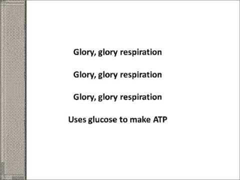 Respiration Song Scottish Higher Biology