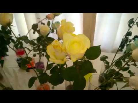 SchoolFreeware Science Video 16 - Changing Rose Colors For Special Occasions - Mother's Day