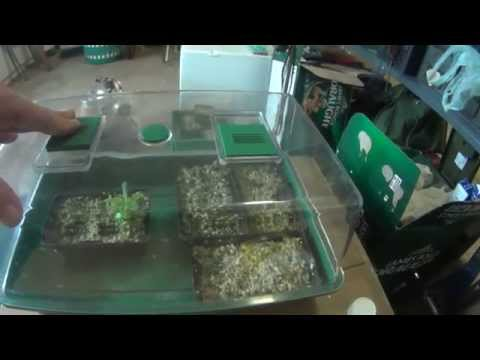Hardning tissue culture plants