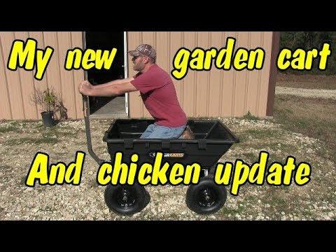 Chicken update and my new garden Gorilla cart.