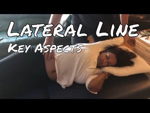 Reviewing The Lateral Line - Motion Specific Release™ (MSR)